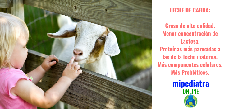 La leche de cabra en alimentación infantil. Grasas de buena calidad, menos lactosa, perfil proteico más parecido a la leche humana.